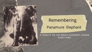 the great elephant leader ever lived