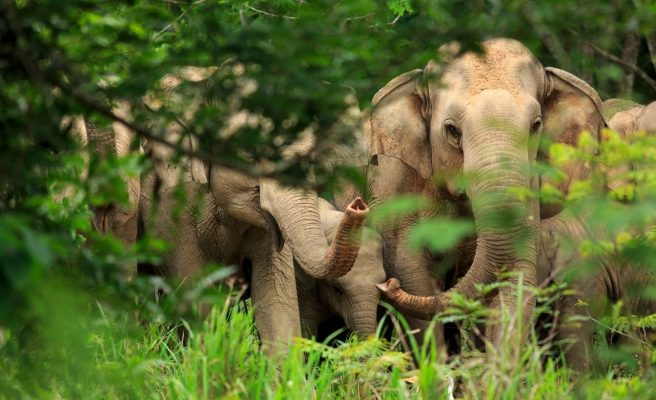 Everything to know about elephants